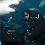 Sharks video from JAR.