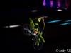 fmx_galdiator_games-2019-72