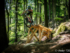 bikepark-moninec-otviracka-2020-61