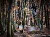 tocna_trails-19
